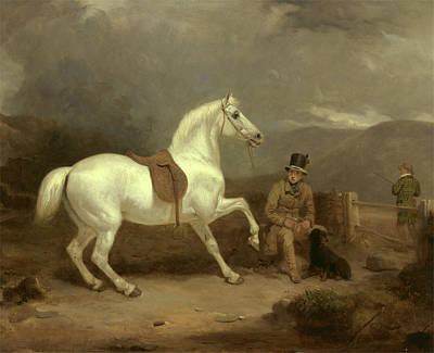Scottish Dog Painting - Grey Shooting Pony, Probably The Property Of Johnston King by Litz Collection