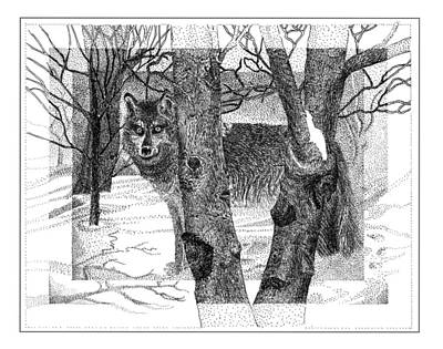 Mexican Grey Wolf In Winter Art Print by Jack Pumphrey
