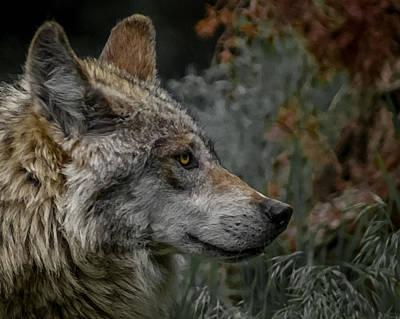 Canines Digital Art - Grey Wolf Profile 3 by Ernie Echols
