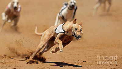 Greyhound Races Art Print by Marvin Blaine