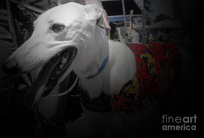 Greyhound Rescue 8 Art Print by Jackie Bodnar