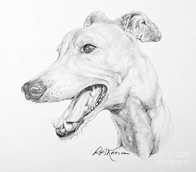 Rescued Greyhound Drawing - Greyhound by Roy Anthony Kaelin