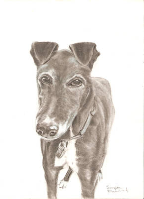 Drawing - Greyhound by Sandra Muirhead