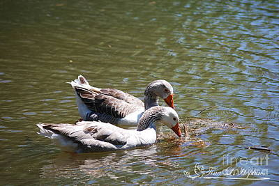 Photograph - Greylag Geese 20130512_58 by Tina Hopkins