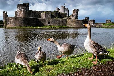 Greylag Geese And Caerphilly Castle Art Print by Paul Williams