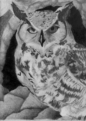 Greyscale Drawing - Greyscale Owl by Tracie Ballensky
