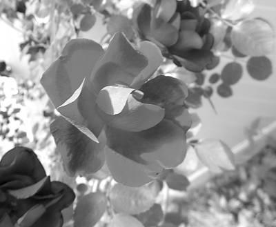 Photograph - Greyscale Rose by John Norman Stewart