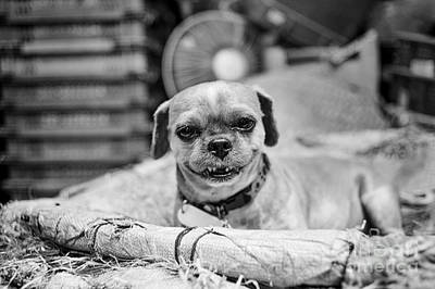 Photograph - Griffon Smile by Dean Harte