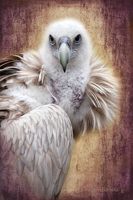 Griffon Vulture Art Print by Barbara Orenya