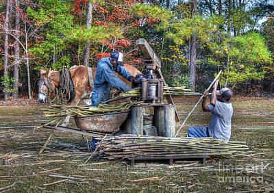 Photograph - Grinding The Sugar Cane At Freewoods Farm by Kathy Baccari