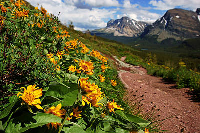 Photograph - Grinnell Glacier Trail Scenery No.2 by Daniel Woodrum