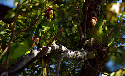 Have A Cupcake - Grinning Green Parrots by Lorenzo Williams