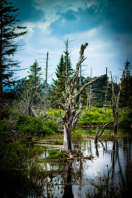 Canaan Valley Photograph - Grip by Shane Holsclaw
