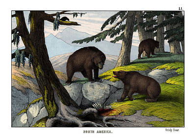 Grizzly Bears Drawing - Grisly Bear by Splendid Art Prints