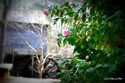 Art Print featuring the photograph Grist Mill Roses by Tara Potts
