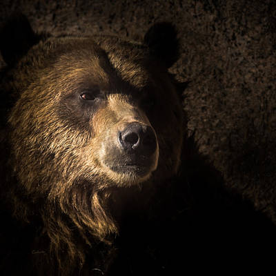 Grizzly Bear Photograph - Grizzly 2 by Ernie Echols
