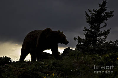 Mammals Photograph - Grizzly-animals-image by Wildlife Fine Art