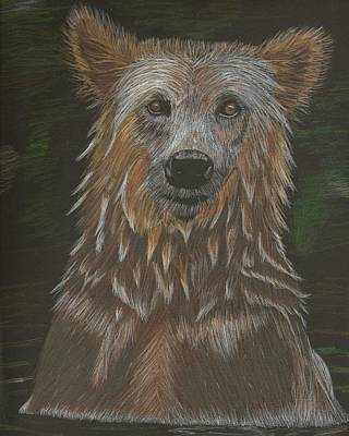Drawing - Grizzly Bath by Sheila Byers