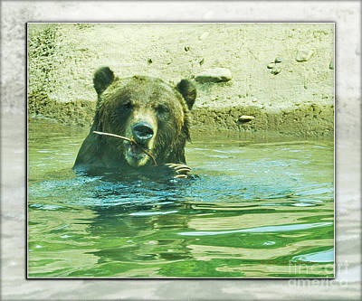 Photograph - Grizzly Bath by Walter Herrit