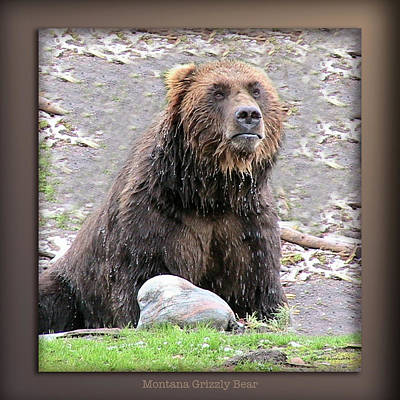 Yellowstone Digital Art - Grizzly Bear 03 by Thomas Woolworth