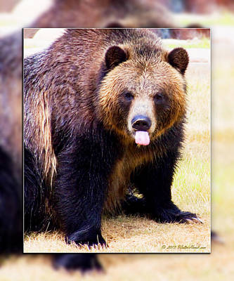 Photograph - Grizzly Bear 2 by Walter Herrit