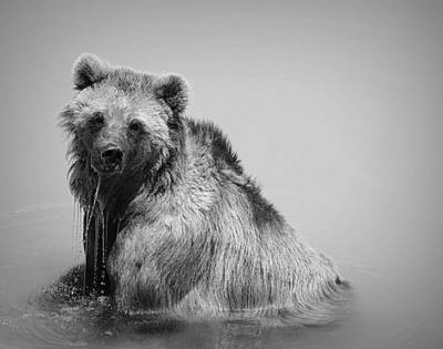 Grizzly Bear Bath Time Art Print