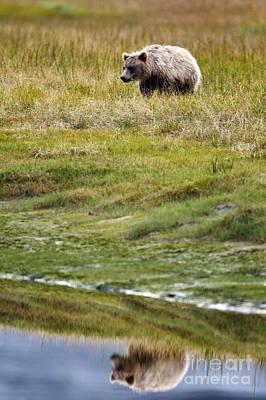 Aretha Franklin - Grizzly Bear Cub Reflection Lake Clark National Park by Jason O Watson