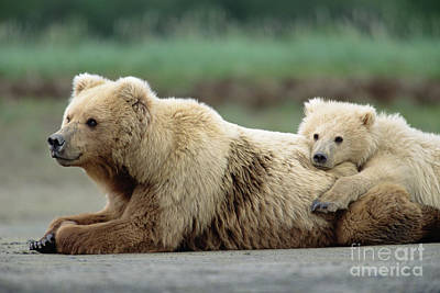 Grizzly Bear Photograph - Grizzly Mother And Son by Yva Momatiuk John Eastcott