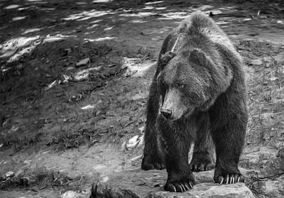 Photograph - Grizzly Bear  by Patrick Boening
