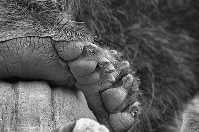 Grizzly Bear Paw Black And White Art Print