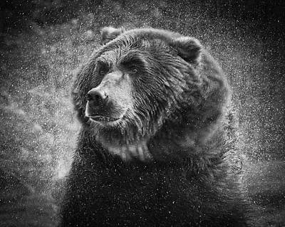 Photograph - Grizzly Bear Rain by Steve McKinzie