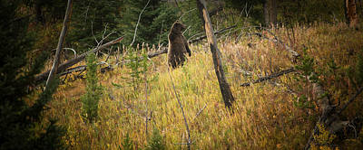 Photograph - Grizzly Bear by Roger Mullenhour