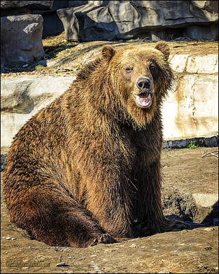 Zoo Photograph - Grizzly Bear Talk     by LeeAnn McLaneGoetz McLaneGoetzStudioLLCcom