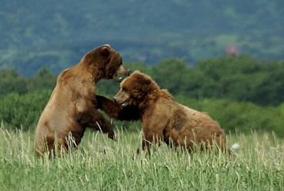 Grizzly Bears Playing Original by Patricia Twardzik