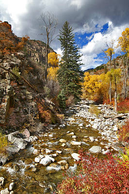 Art Print featuring the photograph Grizzly Creek Cottonwoods Vertical by Jeremy Rhoades