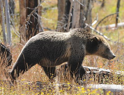 Wall Art - Photograph - Grizzly by Lee Raine