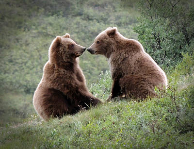 Photograph - Grizzly Mating Pair by Jeff Pfaller