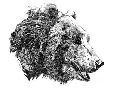 Ursus Drawing - Grizzly Old Bear by Paul Kmiotek
