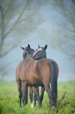 Grooming Horses Art Print by Andy-Kim Moeller