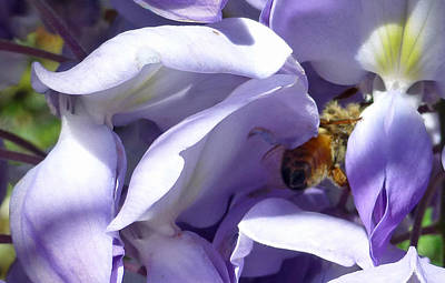 Photograph - Groovy Bee by Claudia Goodell