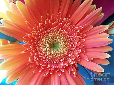 Digital Art - Groovy Gorgeous Gerber by Margie Chapman
