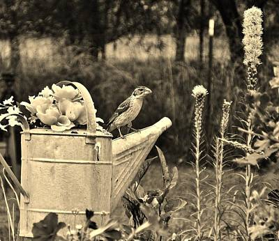 Photograph - Grosbeak On Vintage Watering Can by VLee Watson