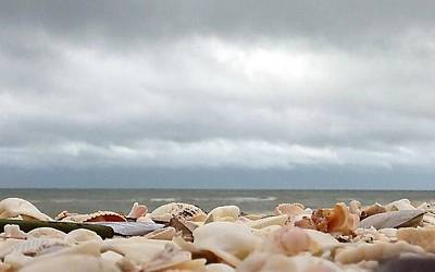 Photograph - Crushed Shells 2 by K Simmons Luna