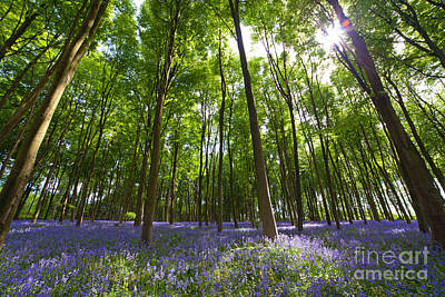 Contre-jour Photograph - Ground Level Bluebells by Richard Thomas