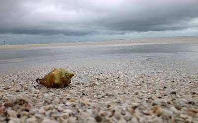 Photograph - Crushed Shells by K Simmons Luna