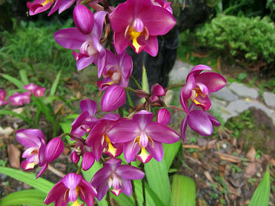 Golden Pink Orchid Photograph - Ground Orchid by Lanjee Chee