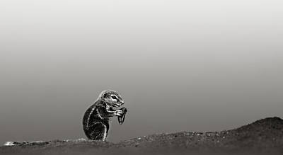 Ground Squirrel Art Print by Johan Swanepoel