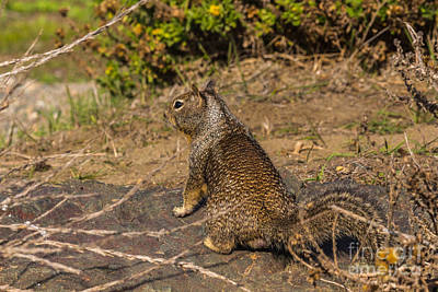 Photograph - Ground Squirrel by Terry Cotton