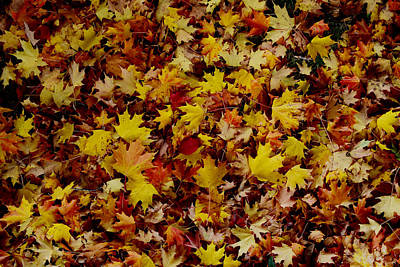 Photograph - Ground Swell In Autumn Leaves by Gary Smith