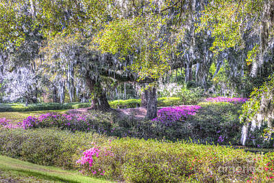 Photograph - Grounds Of Middleton by Dale Powell